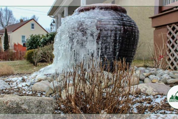 Love Your Winter Landscape! Ideas & Care Tips To Survive The Cold