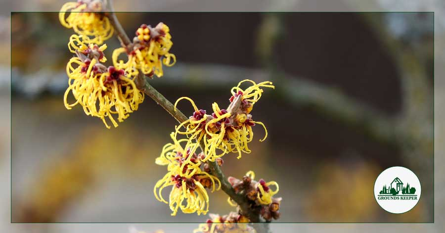 Spotlight On: Witch Hazel, More Than Just A Sunburn Remedy!